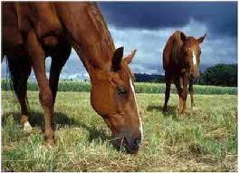 12% Pleasure Horse Feed