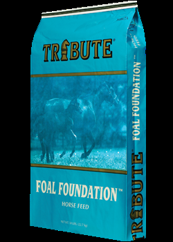 Tribute® Foal Foundation