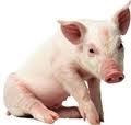 12% Swine Premix