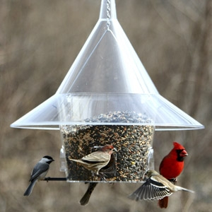Mandrin Sky Café Bird Feeder