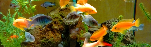 Reptile & Aquatic Supplies:
