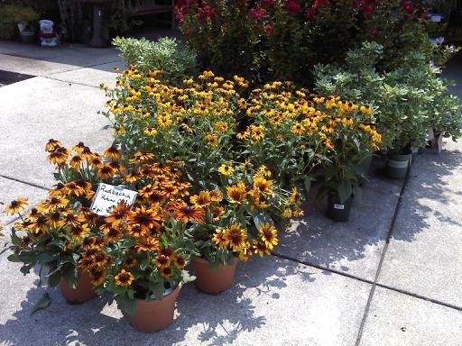 About Us Plant Nursery Athens Ga Bogart Ga Plant Store