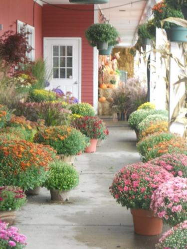 Scammans Home & Garden