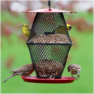 Perky-Pet NO/NO® Sunflower Lantern Wild Bird Feeder