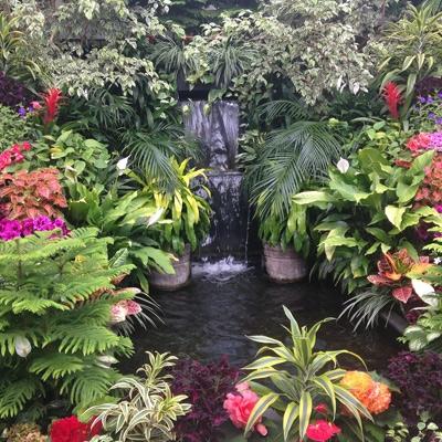 Pond & Water Garden