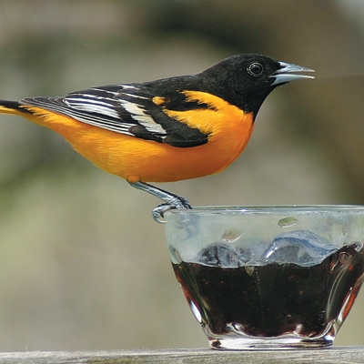 Birdbath and Beyond