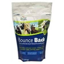 Bounce Back 4#