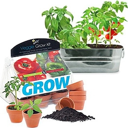Windowsill Salad Garden Grow Kit