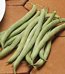 Bean White Half Runner 1#