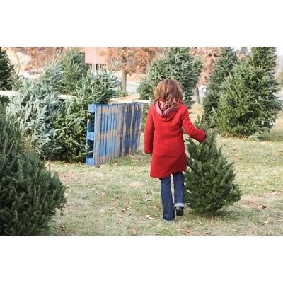 Calendar Coupon: 20% OFF Live Christmas Trees