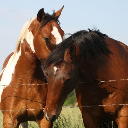 Horse/Equestrian