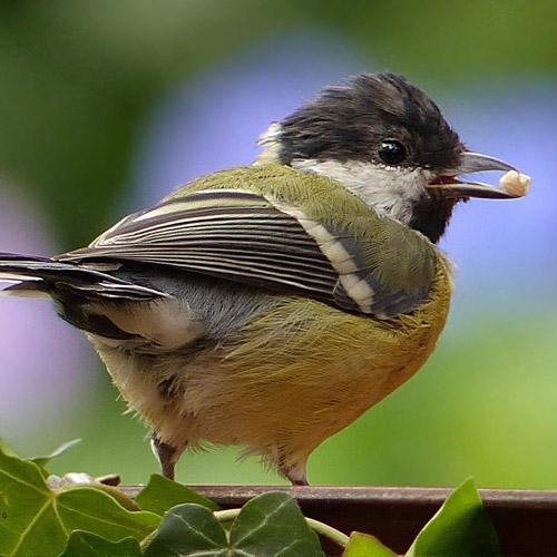 Wild Bird/Wildlife