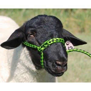 35-7841 LI/BK Weaver Leather Poly Rope Sheep Halter 4' Lime Zest