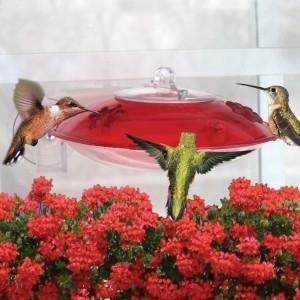 Droll Yankees Window 3 Hummingbird Feeder - 2 Ports