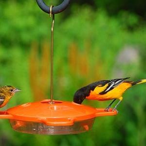 Aspects Oriole Bird Feeder