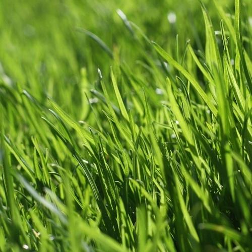 Home, Lawn & Garden