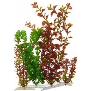 Plant Multi-Pack Asst. 4 Pack