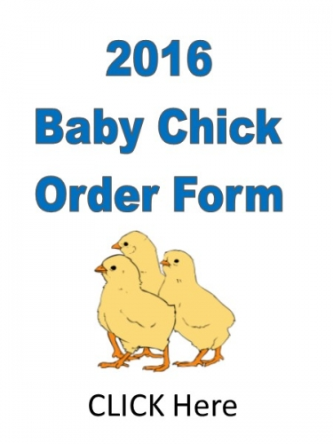 Print our Chick Order Form