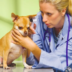 Vet People Vaccination Clinic