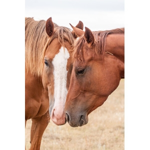Adding Equine Products Soon!