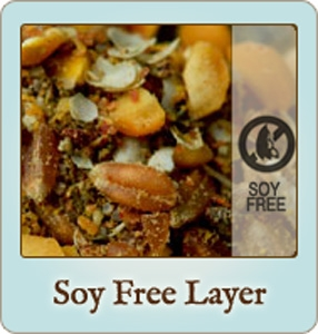 Soy Free Layer Chicken Feed