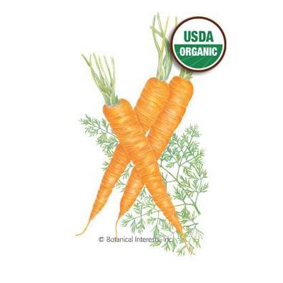 Danvers Carrots126 Organic Heirloom Seeds