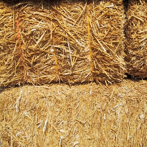 Timothy- Orchardgrass Blend Hay