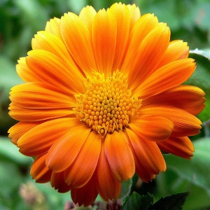 Perennials - Click here for varieties