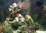 900 Gal. Aquarium