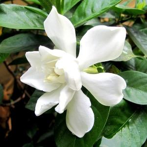 Tropicals - Click here for varieties