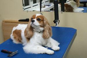 Dog Grooming Tequesta Fl