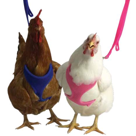 Chicken Harness - Hot Pink