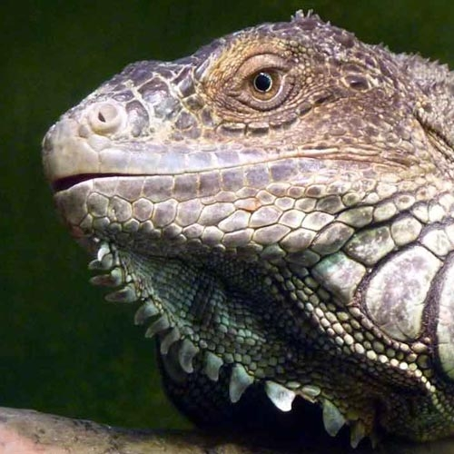Reptiles and Aquatics
