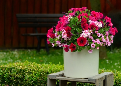 Gardening Anywhere - Patio Containers
