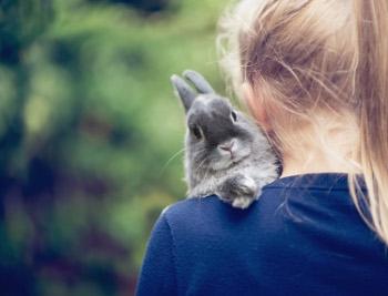 Rabbits Coming Soon!
