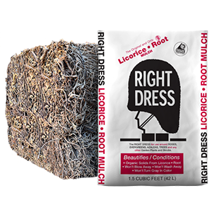 Right Dress Licorice Root Mulch