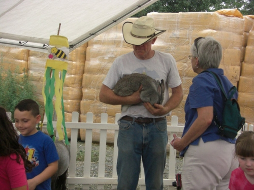 Petting Zoo - July 2011