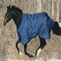 15% Off Winter Horse Blankets