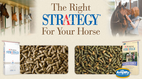 Equine Strategy Slider