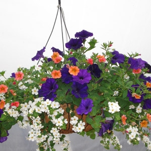 Hart's Nursery Assorted Hanging Baskets