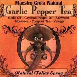 Maestro-Gro Garlic Pepper Tea