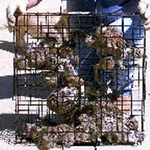 Rugged Ranch Squirrelinator Trap