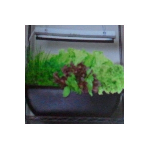 Herb and Vegetable Hydroponic Kit