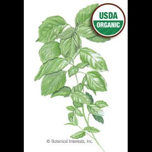 Organic Basil Seed