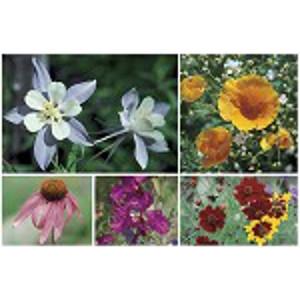 BBB Seed Colorado Wildflower Mix 4oz./ 8oz.