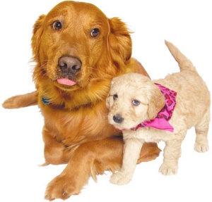 Pals4Pets Dog & Puppy Adoptions