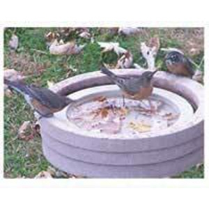 Songbird Essentials Birdbath Raft